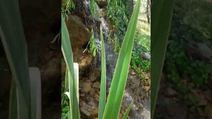 Sihirli Peyzaj Video 1