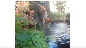 Sihirli Peyzaj Video 22