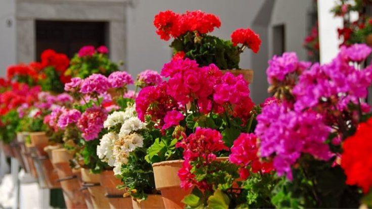 Çiçekler de sıcak ve konforlu bir kış geçirebilir