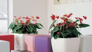 İç ve Dış Mekan Bitki Uygulamaları