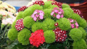 Saksı çiçeklerinizle ne kadar ilgileniyorsunuz?
