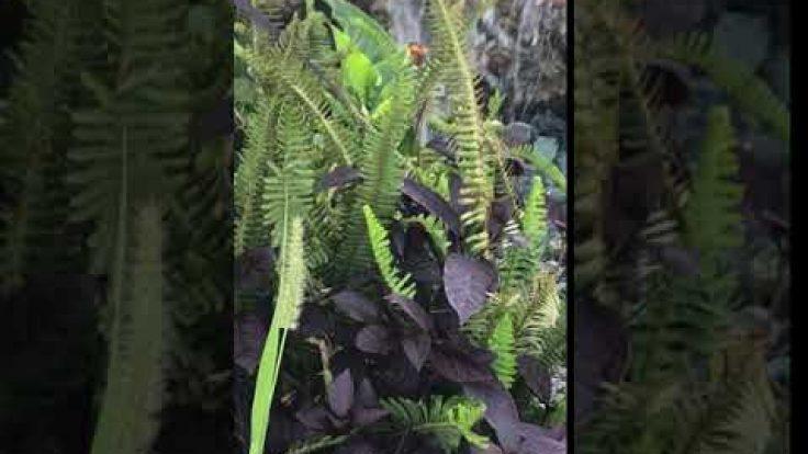Sihirli Peyzaj Video 40