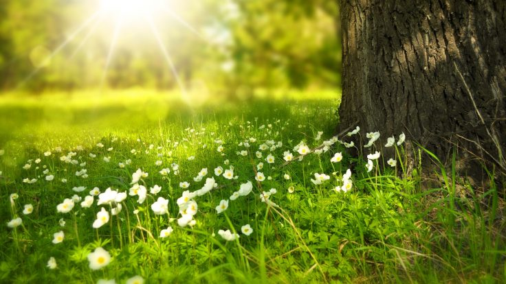 Doğa gibi akışta kalmak mümkün…